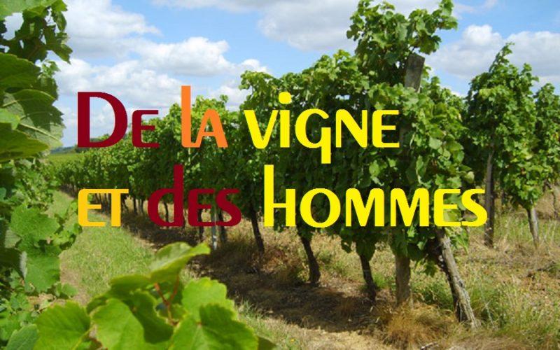 De la vigne et des hommes